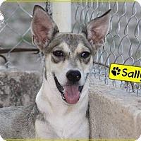 Terrier (Unknown Type, Medium)/Carolina Dog Mix Dog for adoption in St. Catharines, Ontario - Sally