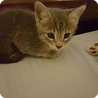 Adopt A Pet :: Amelia - Tucson, AZ