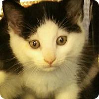 Adopt A Pet :: Amanda - Hallandale, FL