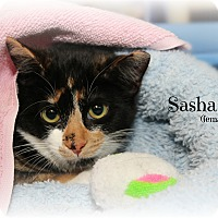 Adopt A Pet :: Sasha - Springfield, PA