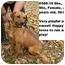 Photo 1 - Shepherd (Unknown Type) Mix Dog for adoption in Zanesville, Ohio - # 589-10 @ Animal Shelter