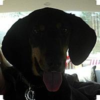 Adopt A Pet :: DJ - Portland, ME