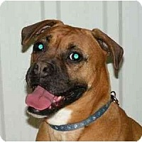 Adopt A Pet :: Mitzy - Rigaud, QC