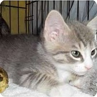 Adopt A Pet :: Pauly - Acme, PA