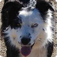 Adopt A Pet :: Azure - Glenrock, WY