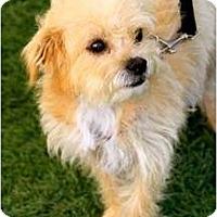 Adopt A Pet :: Junebug - Mission Viejo, CA