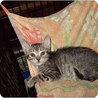 Adopt A Pet :: Sebastian - Fort Lauderdale, FL