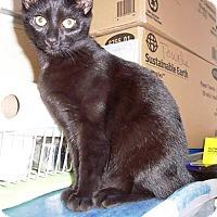Adopt A Pet :: David - Albany, NY