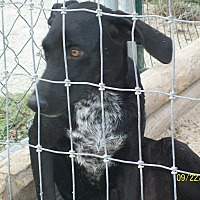 Adopt A Pet :: Bessie - Mexia, TX