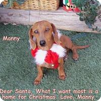 Adopt A Pet :: Manny - Chandler, AZ