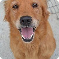 Adopt A Pet :: Birdie - Foster, RI