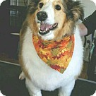 Adopt A Pet :: Tracy