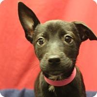 Adopt A Pet :: Stellar - Waldorf, MD