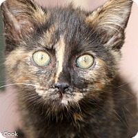 Adopt A Pet :: Juliette Barnes - Ann Arbor, MI