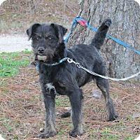 Adopt A Pet :: ARNIE - Bedminster, NJ