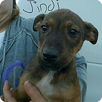 Adopt A Pet :: Jindi - Sussex, NJ