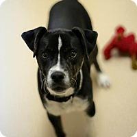 Adopt A Pet :: Freddie - Harmony, Glocester, RI
