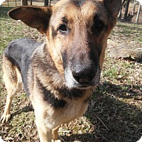 Adopt A Pet :: Jack - Louisville, KY