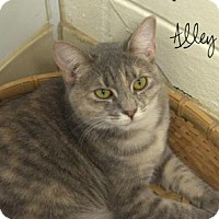 Adopt A Pet :: Alley Kat - Middleburg, FL