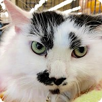 Adopt A Pet :: Groucho - Maryville, TN