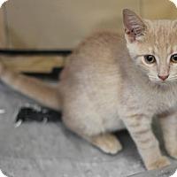 Adopt A Pet :: Tango - Concord, NC