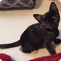 Adopt A Pet :: Fabbri - St. Louis, MO