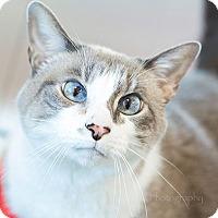 Adopt A Pet :: Sofie - Burlingame, CA