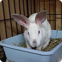 Adopt A Pet :: Willow - Williston, FL
