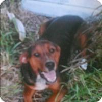 Adopt A Pet :: buddy - Boca Raton, FL