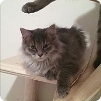 Adopt A Pet :: Willow - Cedar Springs, MI