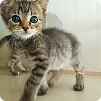 Adopt A Pet :: Alison - Fairmont, WV