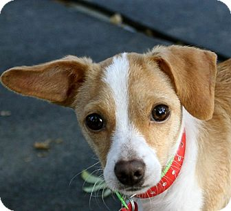 Terrier (Unknown Type, Medium) Mix Dog for adoption in Winters, California - Stella