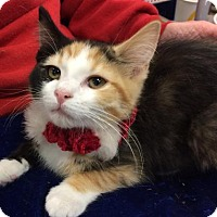 Adopt A Pet :: Makena - Wilmore, KY