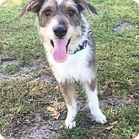Adopt A Pet :: Mia - Boca Raton, FL