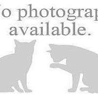 Adopt A Pet :: TODD - Hampton, VA