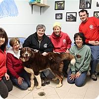 Adopt A Pet :: Harry - Elyria, OH