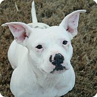 Adopt A Pet :: ARIA - Milwaukee, WI