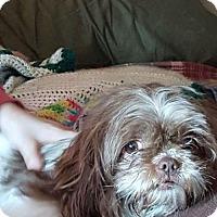 Adopt A Pet :: Princess Poppy - Lewistown, PA
