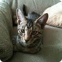 Adopt A Pet :: Barney (Bernard) - Garland, TX