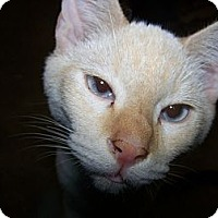 Adopt A Pet :: Whitey - Morriston, FL