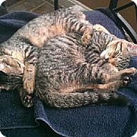Adopt A Pet :: Frankie & Freddie - Xenia, OH