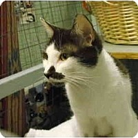 Adopt A Pet :: Simone - Mission, BC
