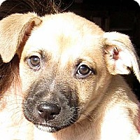 Adopt A Pet :: Baby Tinsel - Oakley, CA