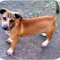 Adopt A Pet :: Mikey - dewey, AZ
