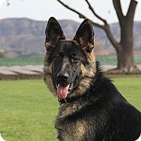 Adopt A Pet :: Fargo - Laguna Niguel, CA