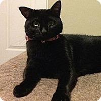 Adopt A Pet :: Kylee - Chandler, AZ