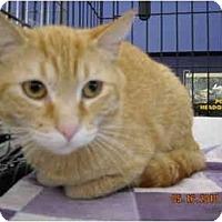 Adopt A Pet :: Ernie - Riverside, RI