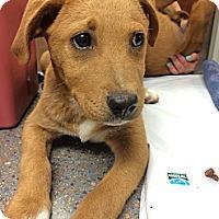 Adopt A Pet :: Ember - Cumming, GA