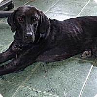 Adopt A Pet :: JODI - Paron, AR