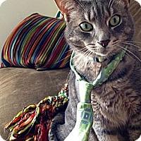 Adopt A Pet :: *Scout - Winder, GA